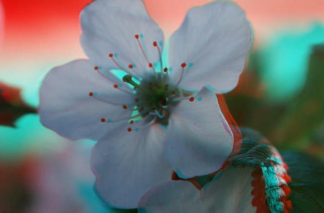 цветок-3d-3