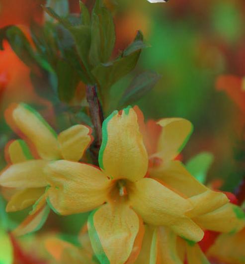 цветок-3d-4