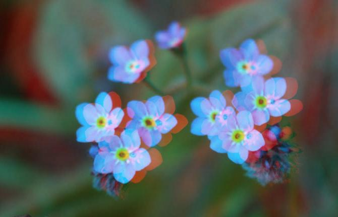 цветок-3d-5
