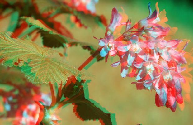 3D цветы | Города 3D