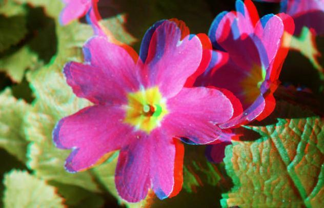 цветок-3d-7