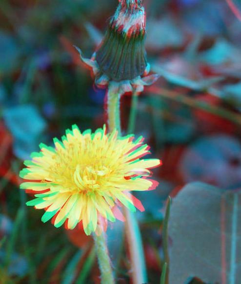 цветок-3d-8