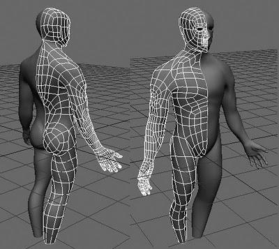3d модель тела человека